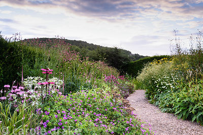 Pink border with Geranium, Echinacea 'Pink Glow', Hylotelephium 'Matrona', Cirsium 'Mount Etna', Monarda 'Beauty of Cobham' a...