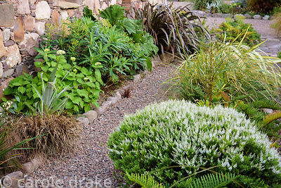 Southern hemisphere plants frame a path including Blechnum chilense, hebes, phormiums and astelia at 2 Durnamuck, Little Loch...