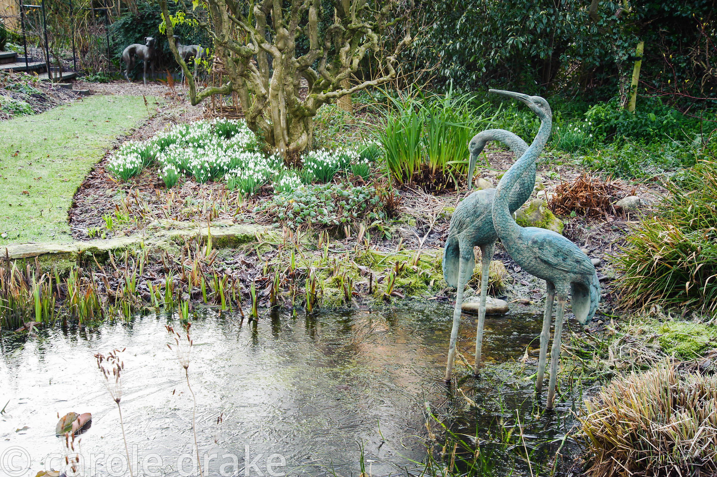 A pair of ornamental cranes in the pond at Windy Ridge, Little Wenlock, Shropshire, UK