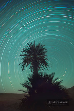 Starry sky and palm (long exposure) - Africa, Libya, Fezzan,Erg Ubari, Mandara Lakes, Maflu Lake (Sahara) - scan