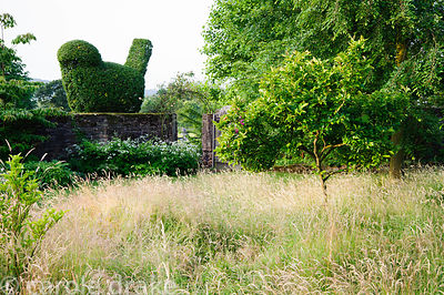 Hawthorn topiary bird appears to sit on the boundary wall. Felley Priory, Underwood, Notts, UK