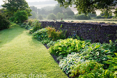 Long border beside boundary wall is full of hostas, ferns and pulmonarias. Felley Priory, Underwood, Notts, UK