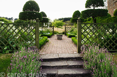 Lavender lined steps lead up into the small White Garden surrounded by trelliswork and featuring clipped Phillyrea latifolia ...