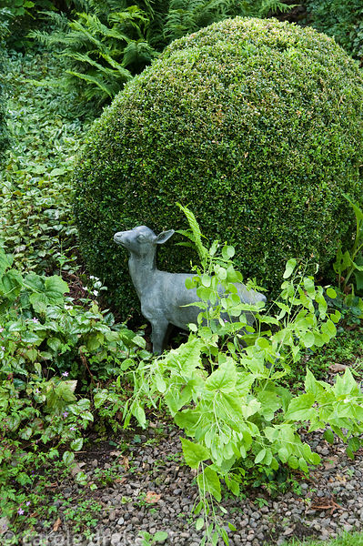 Sculpture of fawn against clipped box in shady area of the garden with ferns behind. Mindrum, nr Cornhill on Tweed, Northumbe...