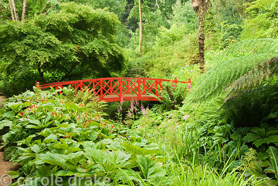 Red Japanese bridge crossing the stream surrounded by moisture loving plants including rodgersias, daylilies, astilbes and fe...