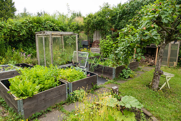 View on the vegetable garden