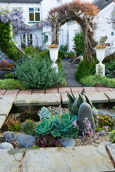 Raised bed of mixed succulents, hardy and tender, including echeverias, sempervivums and spikey Aloe ferox, with archway beyo...