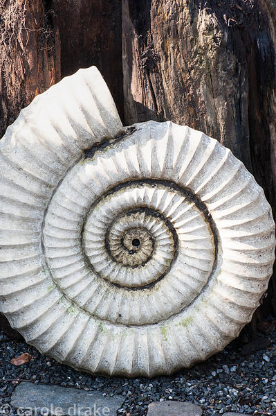 Ammonite cast.