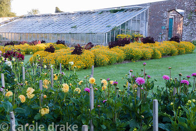 Elizabethan Walled Garden laid out as a Demonstration garden.  Dahlia beds in the foreground with annuals trials beds and gla...