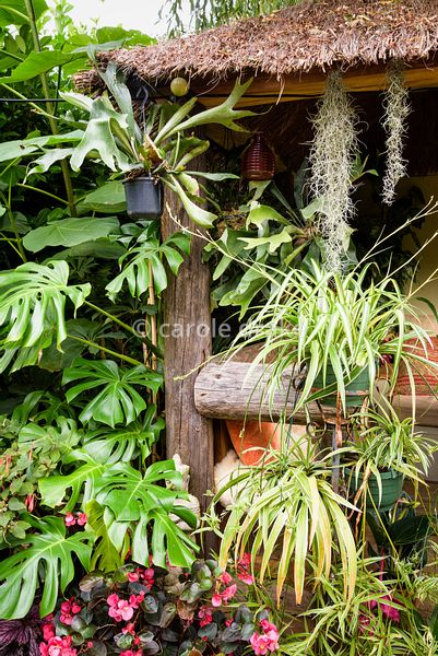 Jungle Hut constructed using recycled telegraph poles at Oak Barn, Newark, Notts in September covered with plants including M...