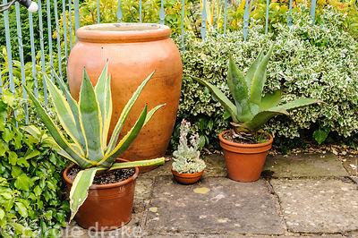 Pots of succulents beside a large ceramic container.