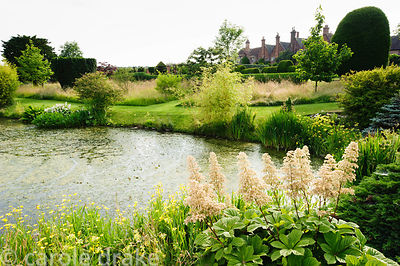 Garden pond fringed with rodgerias, primulas and bamboos, with house beyond. Felley Priory, Underwood, Notts, UK