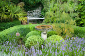 Small herb garden with seating and box hedging includes lavenders and fennel with a central birdbath. Ednovean Farm, Marazion...