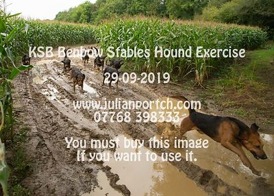 2019-09-29 KSB Benbow Stables Hound Exercise