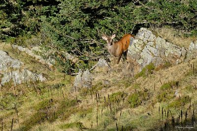 art photo of landscapes and wild animals in the pyrenees during fall 2020