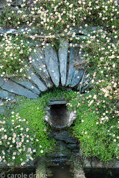 Lower pool on terrace in front of the house, colonised with Erigeron karvinskianus, wall daisy, and stone work  framing water...