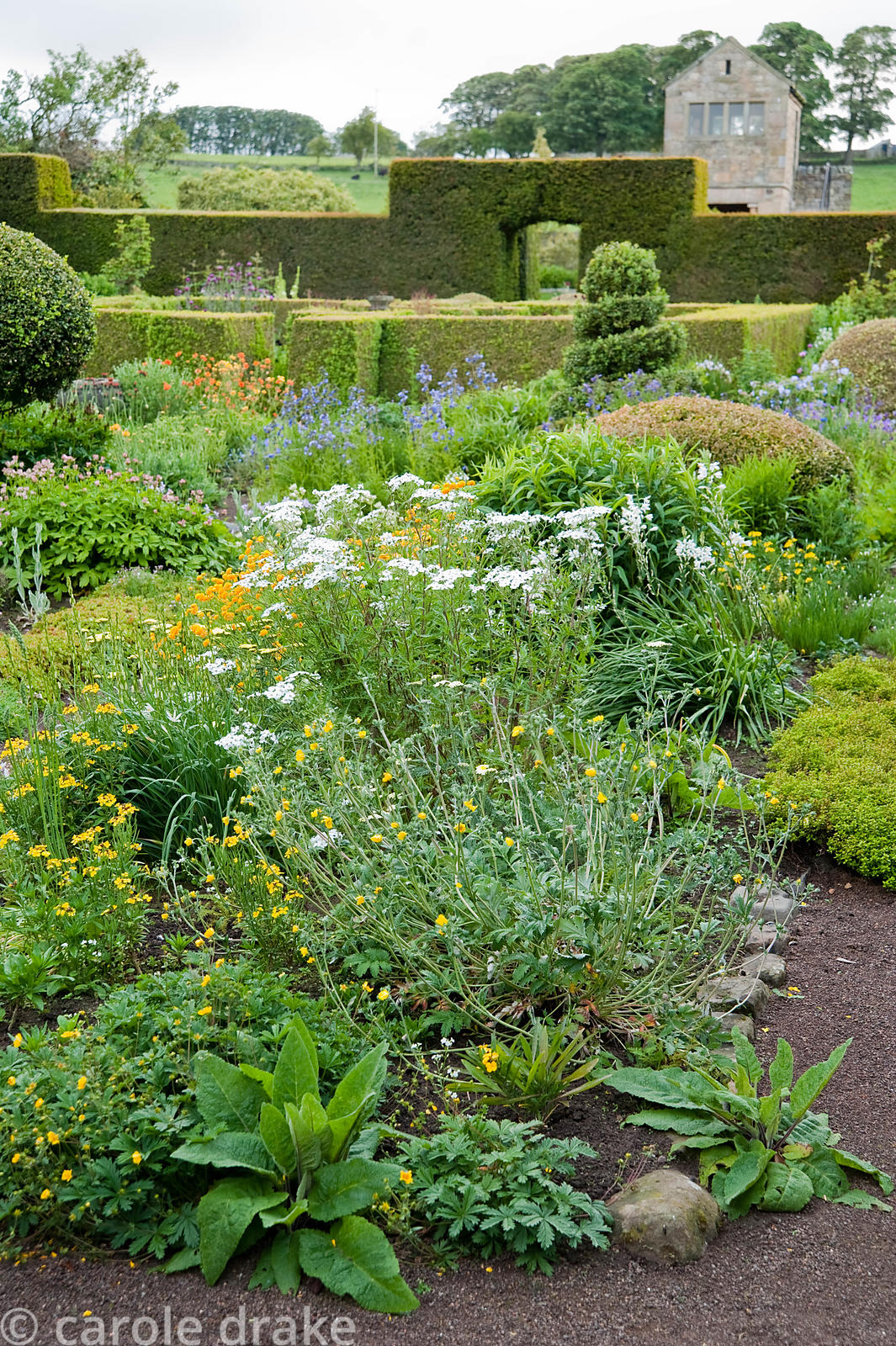 The Flower Garden features strong blocks of box and yew that frame cottage garden plants and flowers, here including achillea...