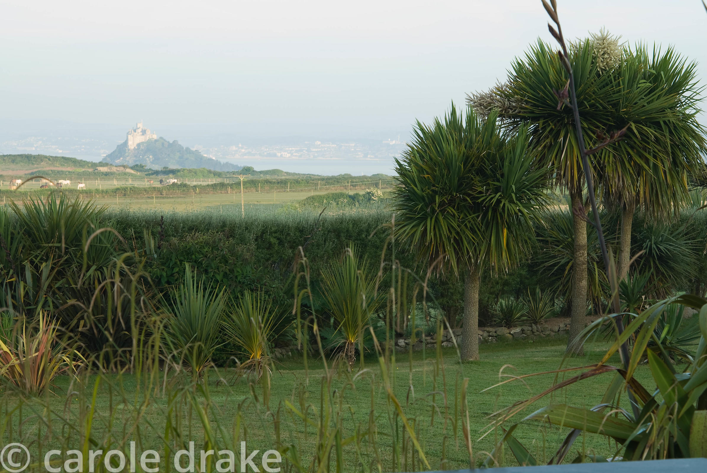 View across surrounding fields to St Michael's Mount. Ednovean Farm, Marazion, Cornwall, UK