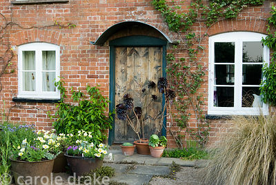 Front of house decorated by pots containing Aeonium 'Zwartkop' and other succulents, with petunias and summer bedding in thos...