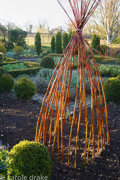 Colourful willow stems used to make a wigwam in the potager at Barnsley House, Cirencester, Glos, UK