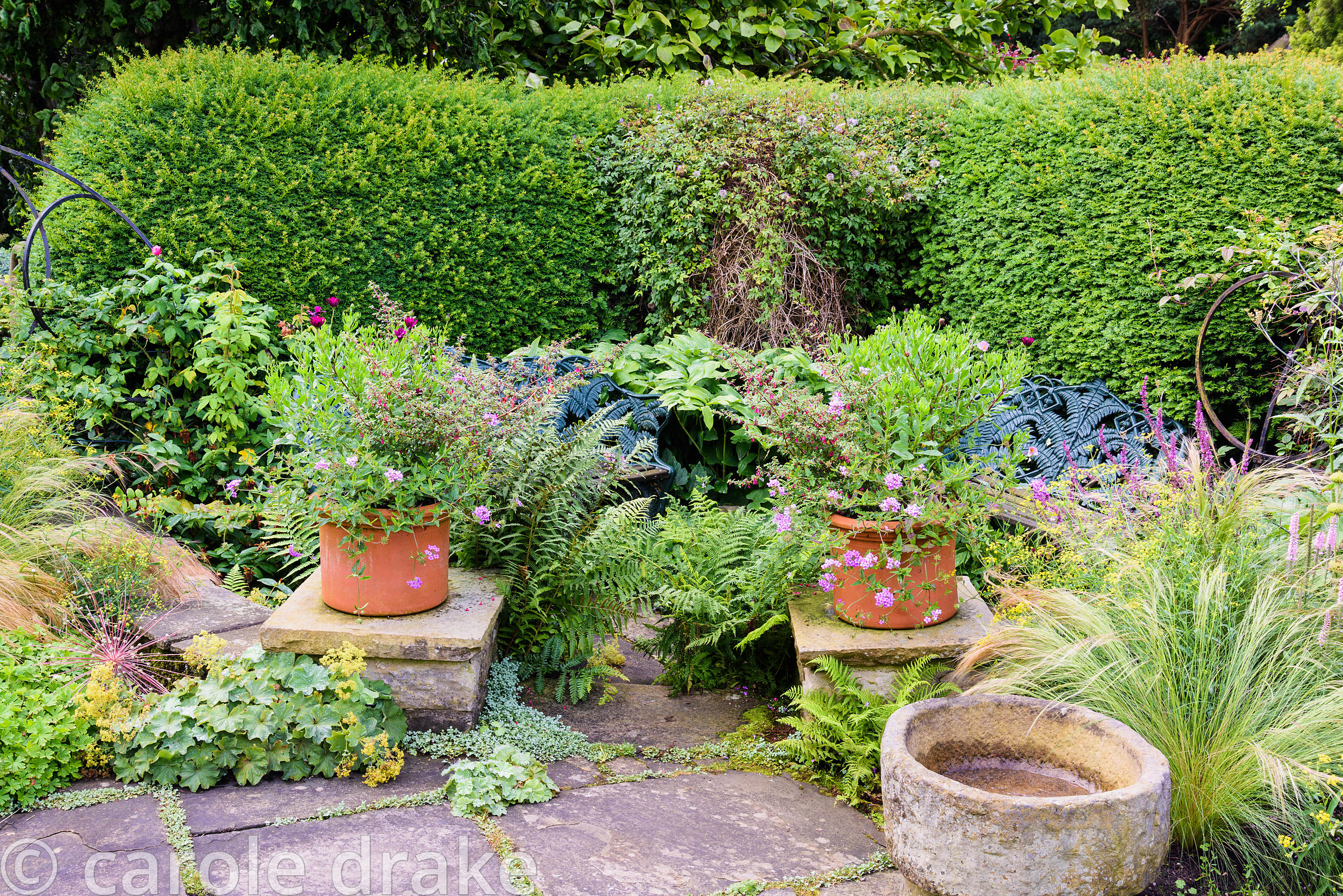 A pair of containers frames a secluded seating area in the Paved Garden, planted with verbenas and fuchsia, surrounded by fer...