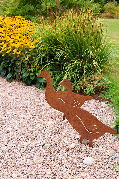 Decorative metal cut out geese in a gravel garden with  Rudbeckia fulgida var. sullivantii 'Goldsturm' behind in September.