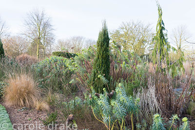 Border of grasses and evergreens including hebes, conifers and euphorbias at Ellicar Gardens, Notts in winter
