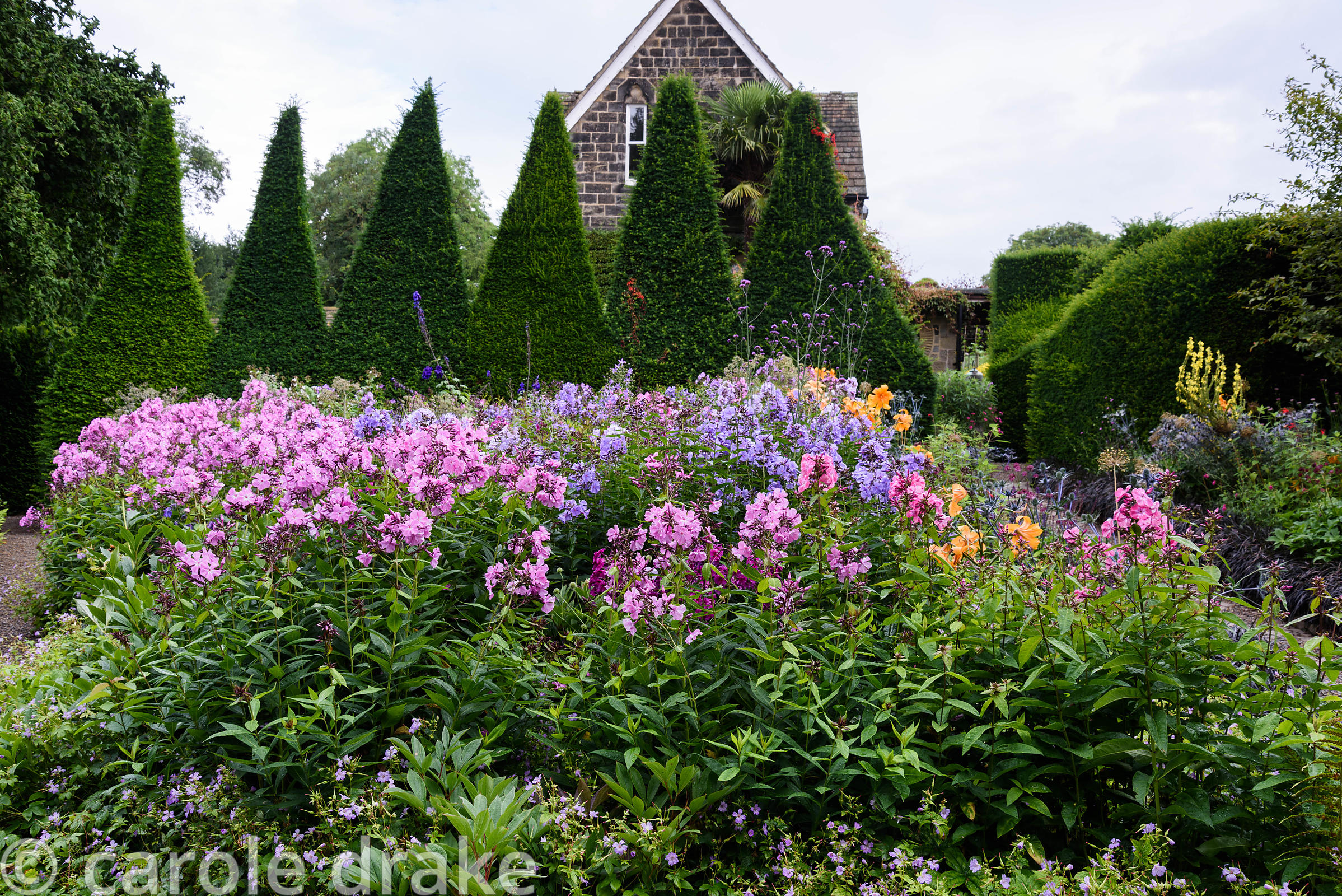 A tall, deeply serrated hedge of clipped yew forms a backdrop to beds in the Canal Garden planted with phlox and lilies at Yo...