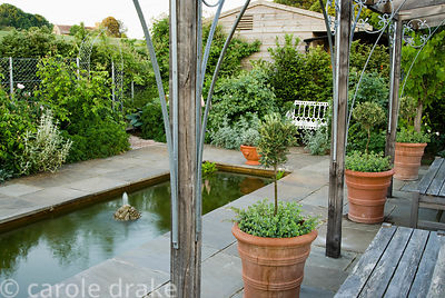 Timber pergola in the pond garden with standard olives in terracotta pots underplanted with Orignanum 'Kent Beauty'. Old Rect...