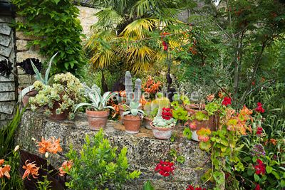 Terracotta pots of cacti and succulents on a wall at Bourton House, Moreton-in-Marsh in August