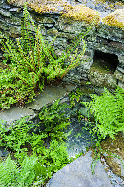 Ferns surround a sunken mirror set within stone walls mimicking a pond.