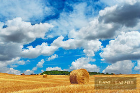 Corn field harvested - Europe, Italy, Tuscany, Siena, Val d'Orcia, Pienza, south of - digital