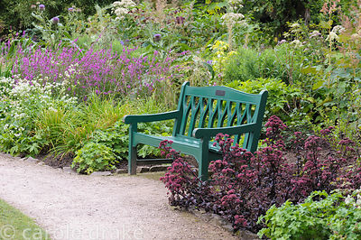 Green bench framed by deep red Sedum telephium 'Purple Emperor', lythrums and astrantias.