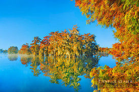 Bald cypress forest in autumn colours with fog (lat. taxodium distichum) - North America, USA, Louisiana, St. Martin, Lake Ma...