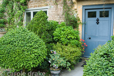 Front door framed by clipped evergreens including Buxus sempervirens 'Rotundifolia', Choisya ternata, sarcococca and pyracant...