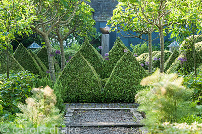 View from the topiary garden into the kitchen garden, dominated by four standard fig trees surrounded by clipped box pyramids...