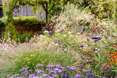 Stipa gigantea amongst heleniums, asters, Pennisetum alopecuroides 'Hameln' and Verbena bonariensis in a garden in rural Nott...