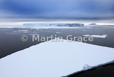 Sea ice and tabular iceberg at approx Latitude: S64°02' Longitude: W56°41'; Weddell Sea, Antarctic Peninsula,  Antarctica
