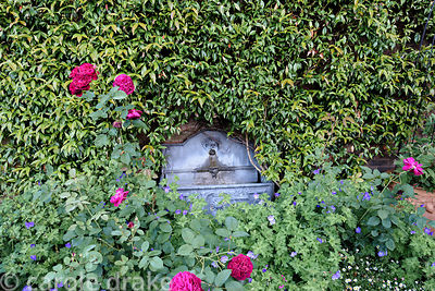 Trachelospermum jasminoides trained against a wall frames a water feature with geraniums, roses and Erigeron karvinskianus in...