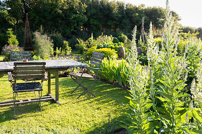 Dining area in the kitchen garden with lichen encrusted table and chairs at Sea View, Cornwall in June