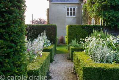 Box parterre near the house contains Nicotiana alata, Salvia sclarea var turkestanica, rosemary and Verbena bonariensis. Cors...
