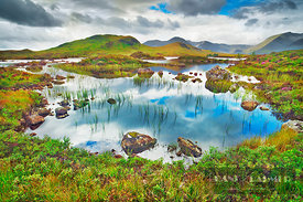 Moorland at Rannoch Moor - Europe, United Kingdom, Scotland, Argyll and Bute, Rannoch Moor (Highlands, Northwest Highlands) -...