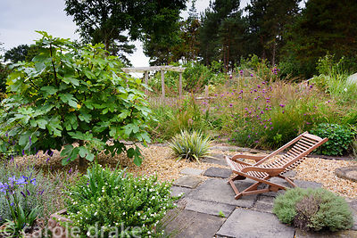 Wooden lounger in gravel garden with inset paving slabs and planting including fig, thymes, astelia, agapanthus, lavender and...