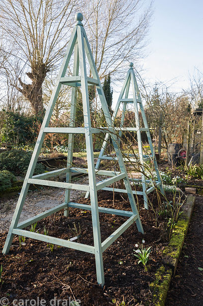 Painted wooden obelisks to support clematis and climbing roses in the summer.