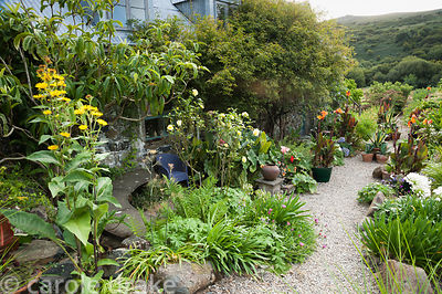 The Courtyard garden features many pots planted with a variety of succulents, orange cannas, agapanthus and other plants surr...