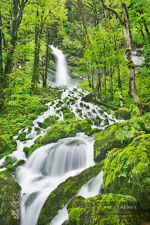 Waterfall in beech forest - Europe, France, Bourgogne-Franche-Comte, Doubs, Pontarlier, Guyans-Vennes, Val de Consolation, Gr...