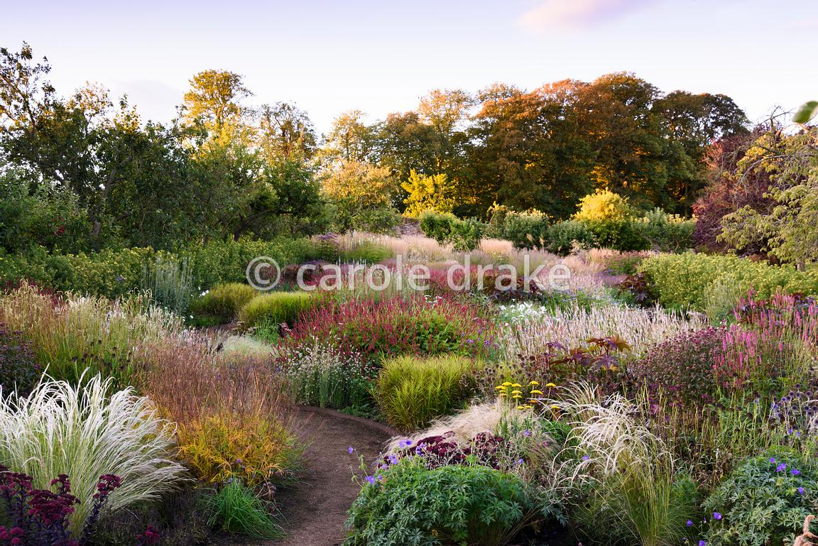 The potager garden planted with a mix of edible and ornamental plants including silvery Jarava ichu, Carex muskingumensis, Se...