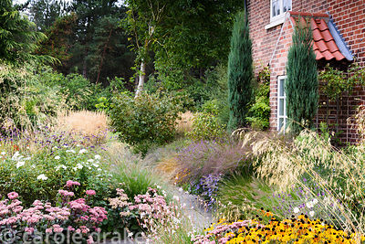 Early autumn in a garden in rural Nottinghamshire planted with a mix of herbaceous perennials and grasses including Rudbeckia...