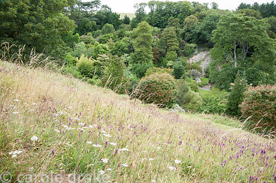 Wildflowers on the slopes of the valley with quarry beyond. Coleton Fishacre, Kingswear, Devon, UK