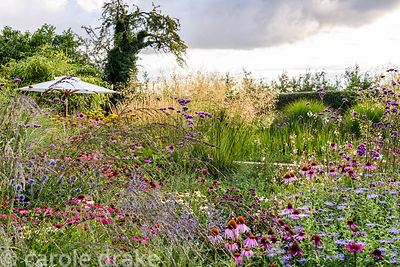 Drifts of prairie inspired planting including Echinacea purpurea 'Rubinglow', Echinacea purpurea 'White Swan', Panicum virgat...